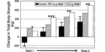 HMB 筋肉合成の実験